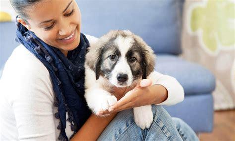 Animal Care Clinic North  Elkhart Animal Hospital