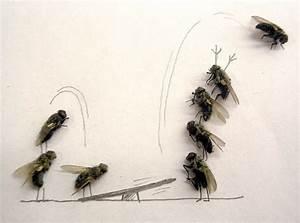 Fliegen Im Rolladenkasten : fliegen erscheinen aus dem nichts seite 2 allmystery ~ Lizthompson.info Haus und Dekorationen