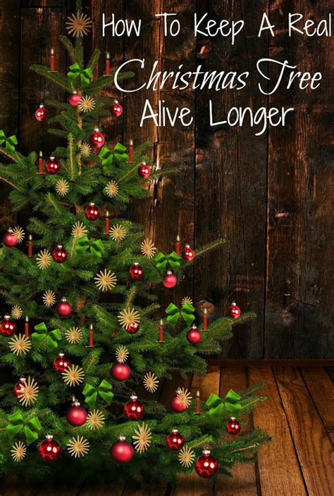 how to keep a real christmas tree alive longer just 2
