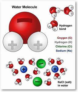 Water Molecules And Their Interaction With Salt Molecules