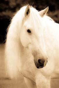 Du Bist Ein Traum : bist du ein traum oder nicht love pinterest shire pferd wei e pferde und sch ne pferde ~ Orissabook.com Haus und Dekorationen