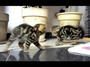 Kitten Funny Cat Videos YouTube
