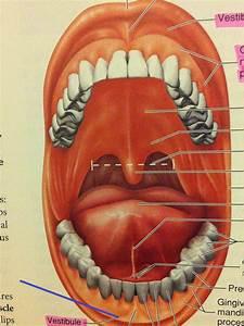 Bio 2112 Study Guide  2012-13 Lepage