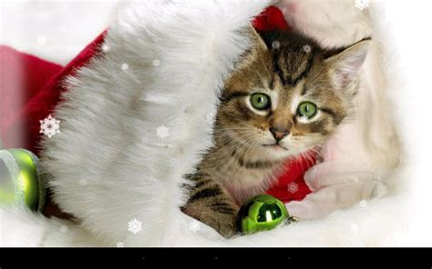 xmas cat  wallpaper android apps  google play