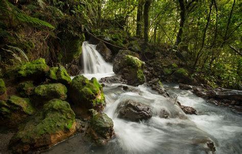 wallpaper forest stream stones waterfall stream