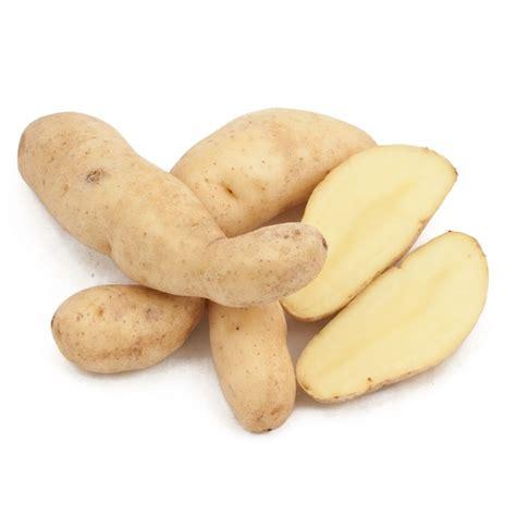cuisiner la ratte organic seed potatoes la ratte fingerling groworganic com