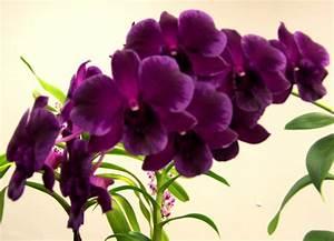 Image detail for -Maui - The last island - Dark Purple ...