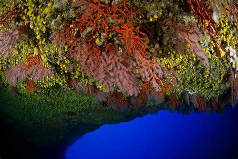 coral cave reefs mediterranean features