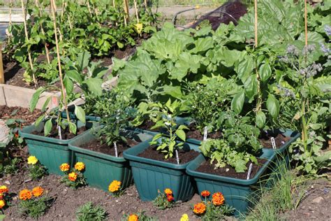 potager en pot balcon potager en pot jardins de pots
