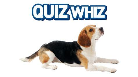 quiz whiz dogs