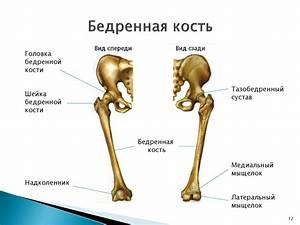 Если болит голеностопный сустав к какому врачу обратиться