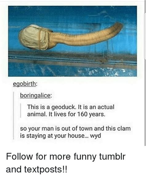 Funniest Memes Ever Tumblr - egobirth boringalice this is a geoduck it is an actual animal it lives for 160 years so your man