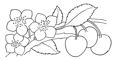 Free Drawing Flowers, Download Free Clip Art, Free Clip