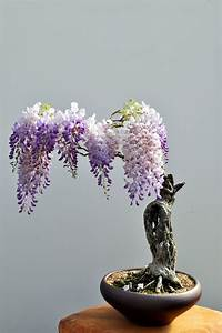 Bonsai Baum Arten : 12 tra i pi bei bonsai esistenti al mondo ~ Michelbontemps.com Haus und Dekorationen