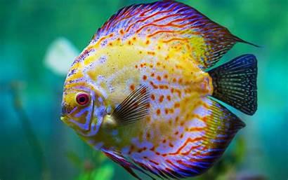 Fish Sea Yellow Wallpapers13