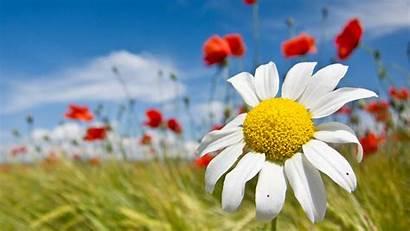 Spring Screensavers Flowers Wallpapers Wallpapersafari Enjoy