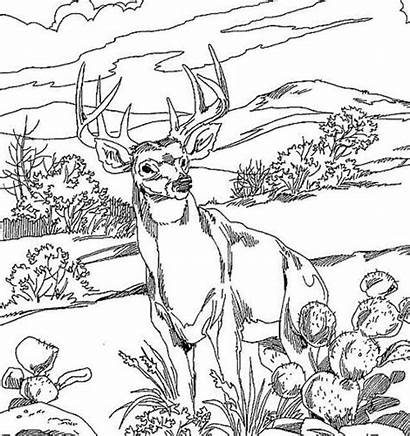 Coloring Hunting Deer Pages Awesome Animal
