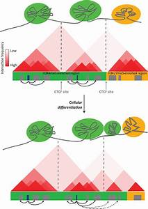Regulation Of Gene Transcription By Polycomb Proteins