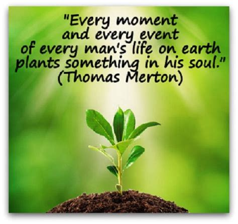 Plant Your Roots Quotes