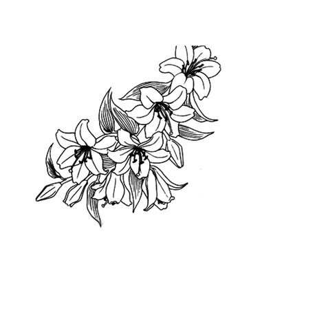Flores PNG para tuto by GinaEditions on DeviantArt