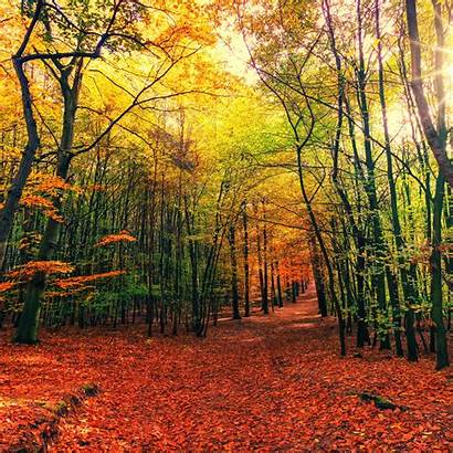 Forest Sunny Nature 5k Autumn Wallpapers Foliage