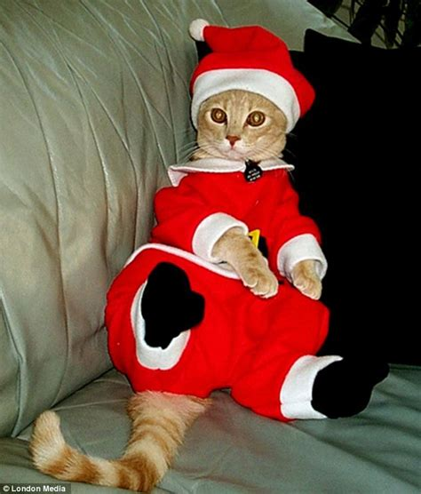 santa paws claws   hooves cute dogs lizards
