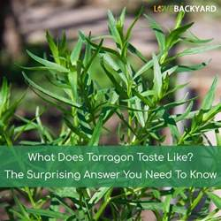 What Does by What Does Tarragon Taste Like The Surprising Answer You