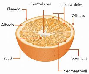 The Orange Fruit And Its Products
