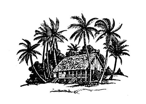 hand drawing coconut tree  house vector vector plant