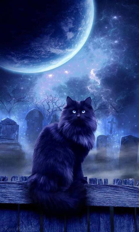 moon cat black cats bring good luck  precious bear