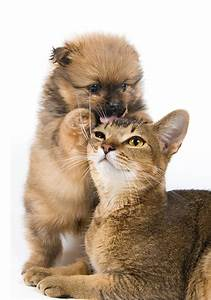 Weißer Wurm Katze : bilder welpe katze hunde zwei tiere wei er hintergrund ~ Markanthonyermac.com Haus und Dekorationen