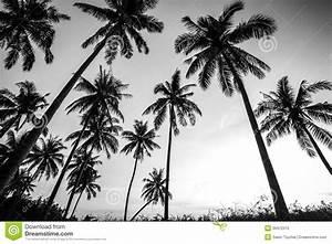 Palme Schwarz Weiß : foto blanco y negro de palmeras foto de archivo imagen 39472315 ~ Eleganceandgraceweddings.com Haus und Dekorationen