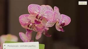 Comment Soigner Une Orchidée : comment faire refleurir une orchid e l 39 esprit jardin ~ Farleysfitness.com Idées de Décoration