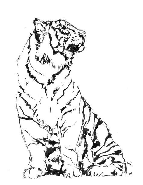 tigre da disegnare per bambini tigre realistica disegno da colorare gratis disegni da