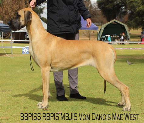 The Great Dane - South African Great Dane Association