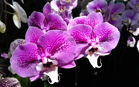 types of orchids orchids