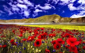 Poppy Field Wide Wallpaper 3047