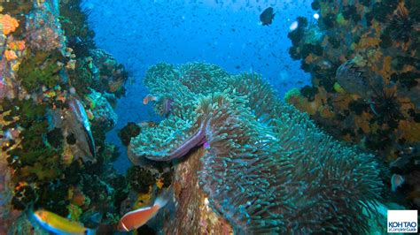 Ko Tao Dive by Koh Tao Dive Koh Tao A Complete Guide