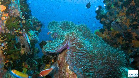 koh tao dive koh tao a complete guide - Ko Tao Dive