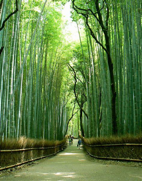 Jardin De Bambou Lyon by L Esprit Du Bambou Le Japon D Asiemut 233 E
