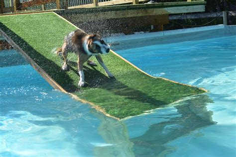 Best Dog Pool Ramp Reviews 2018  Dog Ramp For Suv