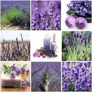Pflege Von Lavendel : lavendel pflege richtig pflanzen schneiden vermehren ~ Lizthompson.info Haus und Dekorationen
