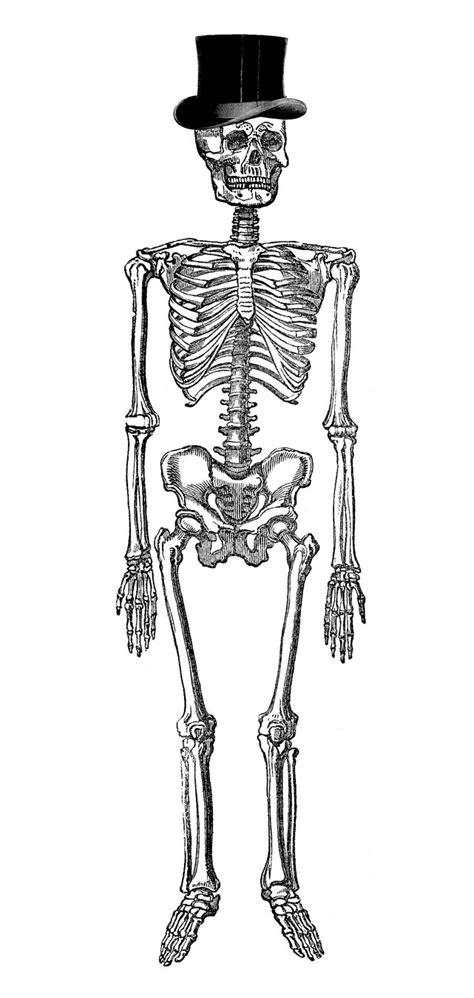 skeleton clipart vintage clip fancy skeleton the
