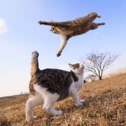 flying cats flying cat cat