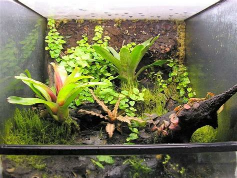 accessories terrarium tropical plants interior decoration and home design