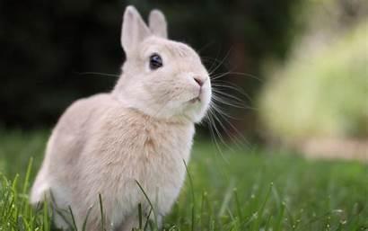 Bunnies Bunny Desktop Backgrounds Wallpapersafari
