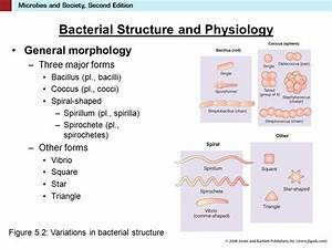 5 Bacteria The First Microbes. - ppt video online download