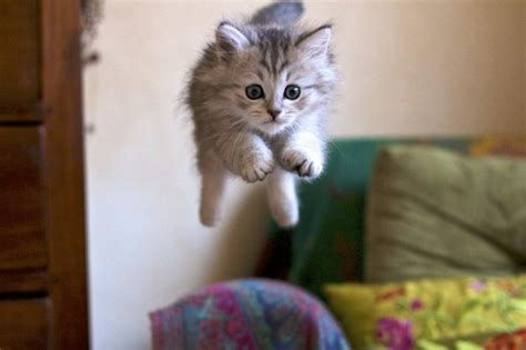 suesse katzen fotografiert im richtigen moment archzinenet
