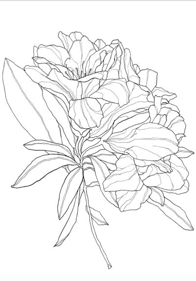 Pin by Olivia Long on doodles   Delphinium flowers