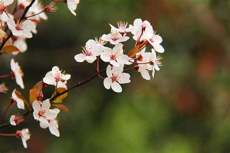 Free Images : nature branch flower petal bloom travel
